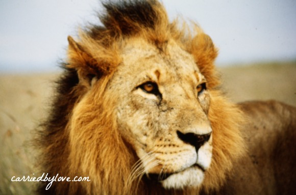 We live in a metaphorical lion's den.